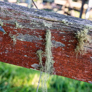 Moss and lichen adorn a fence rail.