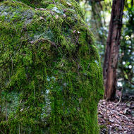 Lichen and moss covered rock.