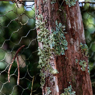 Lichen on a fence post.