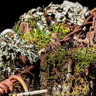Lichen and moss atop a fence post.