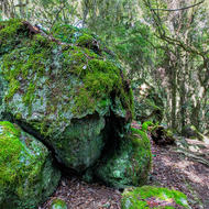 Mossy rocks in a gondwana forest.