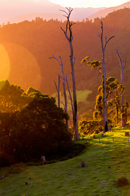 Thumbnail image ofSun at dawn sidelights dead trees.