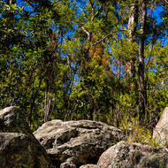 Boulders, trees and blue sky.