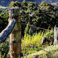 Wire strainers on a mossy corner post.