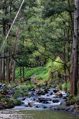 Thumbnail image of The Condamine River gently steps down the Cambanoora...