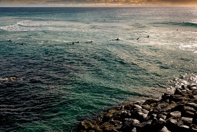 Thumbnail image ofSurfers heading out at sunrise.