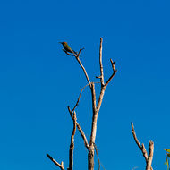 Bird high in a dead tree in the wetlands.