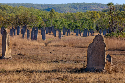Thumbnail image ofLike grave headstones, a field of magnetic termite,...