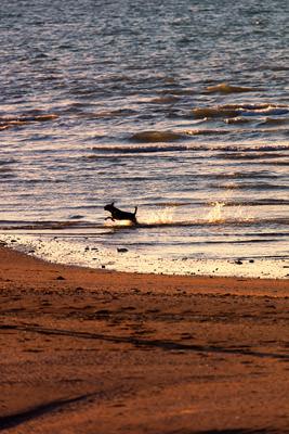 Thumbnail image ofBounding dog.