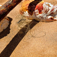 Beach debris: Rusty pipe and nylon fishing line.