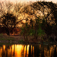 Setting sun burns through the trees along the billabong.