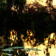Sunset glow to the sky reflects in the quiet billabong waters.