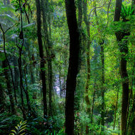 Trees and ferns of rainforest and Rosewood Creek down below.