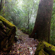 Rainforest trail in the mist and with freshly fallen hailstones.