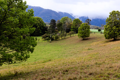 Thumbnail image ofGreen pasture at the foot of the mountains.