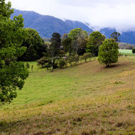 Green pasture at the foot of the mountains.