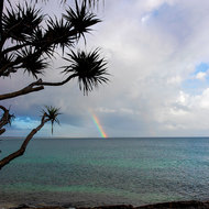 Rainbow over Laguna Bay through the coastal Pandanus Pine.