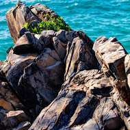 Small clump of vegetation on rocks jutting out over the ocean.