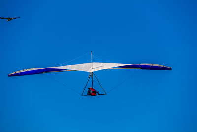 Thumbnail image of Birds of a feather: hang glider and friend above...