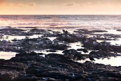 Thumbnail image ofCormorant and seagulls on Flat Rock.