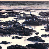 Cormorant and seagulls on Flat Rock.