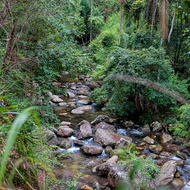 Upper Logan River through the rainforest.