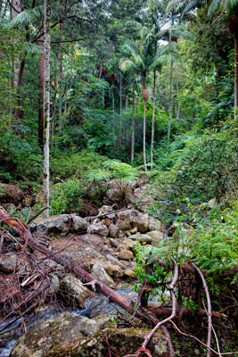 Thumbnail image ofUpper Logan River in the rainforest.