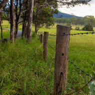 Roadside fence line.