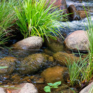 Grasses and rocks in the river.