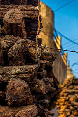 Thumbnail image of Wood stacked for cremations.