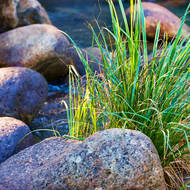 Grass and rock.