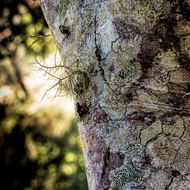 Fungus and lichen on a tree.