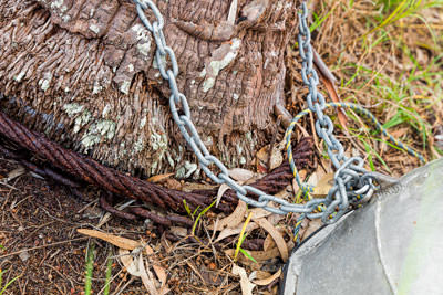 Thumbnail image ofAluminum dinghy chained to palm tree.