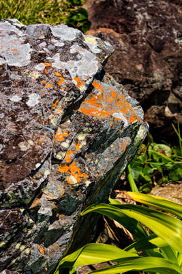 Thumbnail image ofLichen encrusted rock.