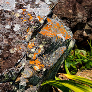 Lichen encrusted rock.