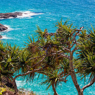 Pandanus on Double Island Point.