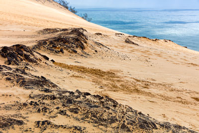 Thumbnail image ofCoffee rock, sand cemented by organic matter,...