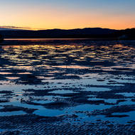 Pre-sunrise light on the mangrove flats at low tide.