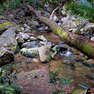Cronin Creek running through rainforest.