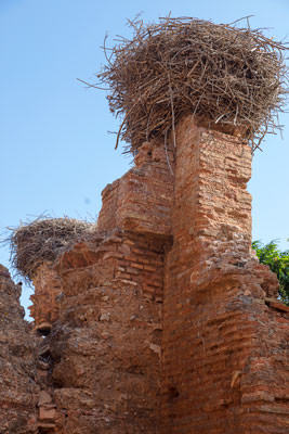 Thumbnail image of Stork nests at the high points.