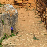 Flower amongst the ruins.