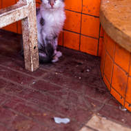 Cat in the meat market.