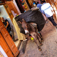 Heavily laden, goods transport within the narrow medina streets.