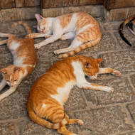 Cats in any color, if you want ginger.