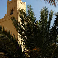 Date palms within the garden of a mosque.