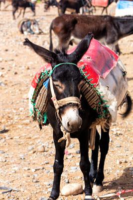 Thumbnail image ofHand stitched saddle.
