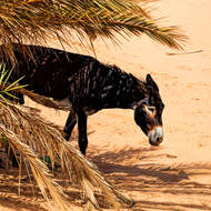 Donkey stands sensibly in the shade.