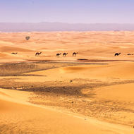 A caravan of camels crosses the desert.
