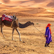 Camel and handler.
