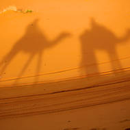 Camel shadows.